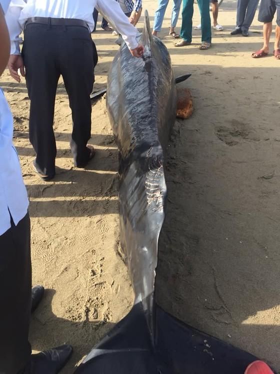 Phát hiện con cá voi nặng gần 1 tấn trôi dạt vào bờ biển ảnh 5