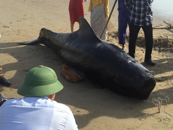 Phát hiện con cá voi nặng gần 1 tấn trôi dạt vào bờ biển ảnh 6