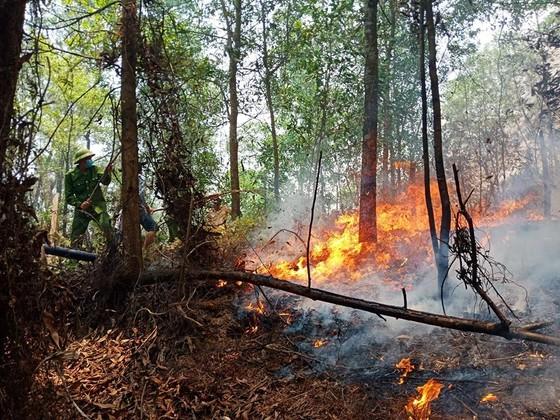 Lại xảy ra cháy rừng tại Hà Tĩnh ảnh 3