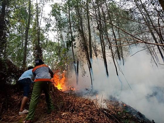 Lại xảy ra cháy rừng tại Hà Tĩnh ảnh 2
