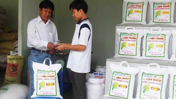 Gạo Việt củng cố thương hiệu  ảnh 1