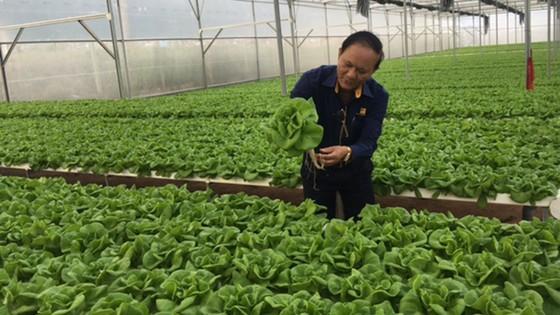 Những trang trại rau sạch  ảnh 2