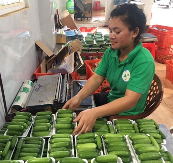 Những trang trại rau sạch  ảnh 4