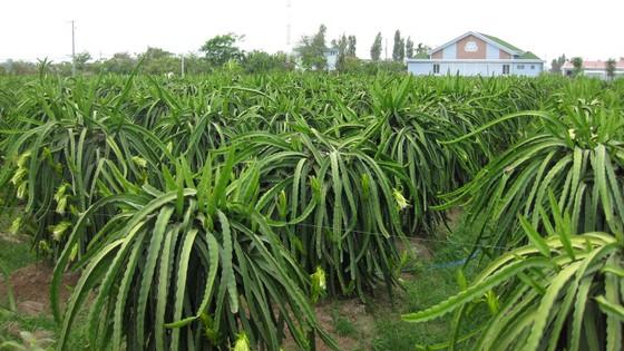 Tập trung phát triển nông nghiệp công nghệ cao  ảnh 1