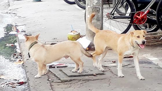 Hiểm họa chó cắn người ảnh 1