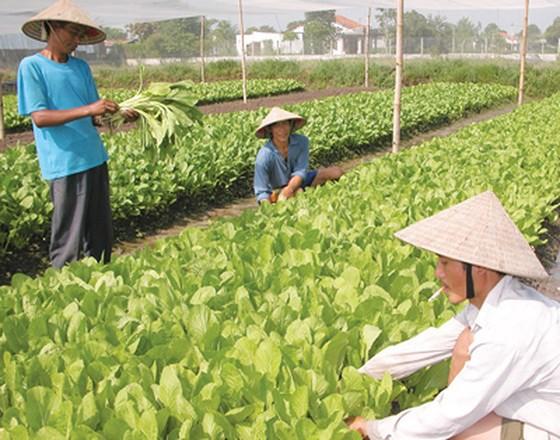 Hợp tác cung ứng nông sản an toàn ảnh 1