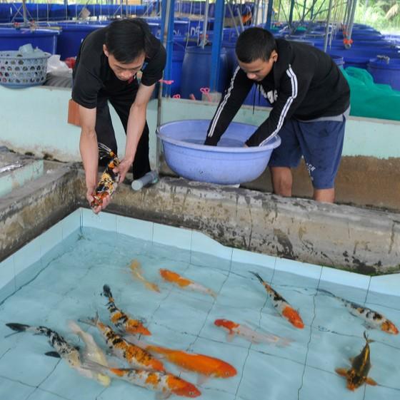 Chuỗi liên kết giúp nâng cao giá trị cá cảnh ảnh 1