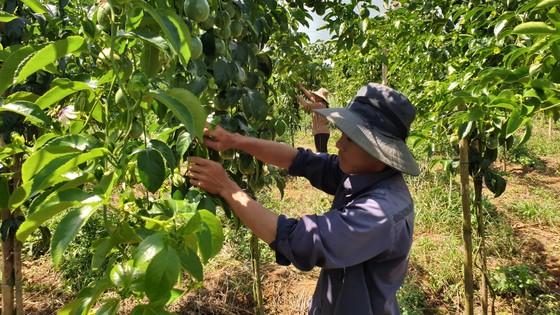 Đắk Nông chuyển hướng làm nông nghiệp sạch ảnh 1
