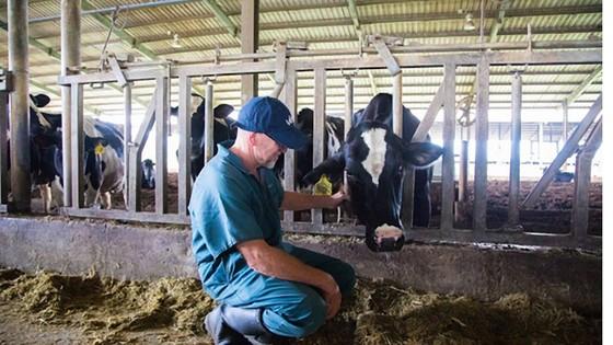 Tập đoàn TH sản xuất thành công sữa tươi A2  ảnh 1