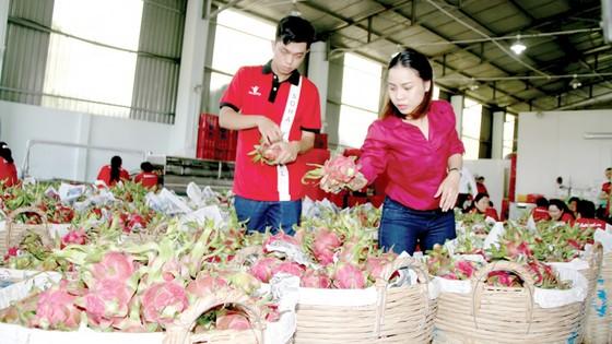 Xuất khẩu nông sản sang Trung Quốc - Chất lượng, thương hiệu là hàng đầu ảnh 1