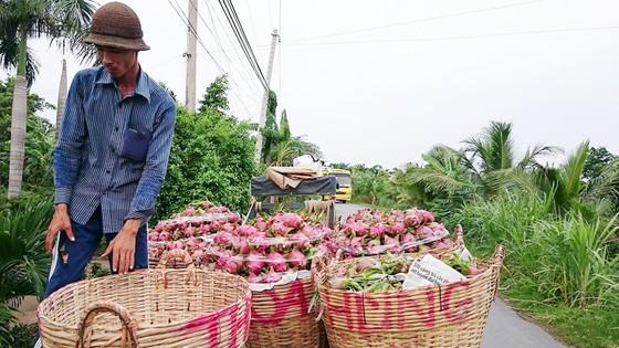 Sản xuất và xuất khẩu cây ăn quả: Thiếu thông tin về thị trường tiêu thụ ảnh 1