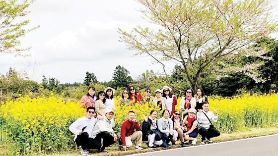Du xuân Hàn Quốc ngắm hoa anh đào cùng Pymepharco ảnh 1