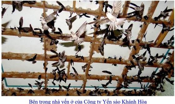 Phát triển bền vững nghề nuôi chim Yến tại Nam Trung bộ và Tây Nguyên ảnh 3