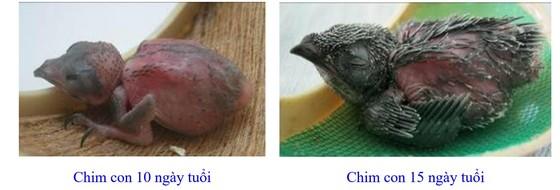 Phát triển bền vững nghề nuôi chim Yến tại Nam Trung bộ và Tây Nguyên ảnh 7