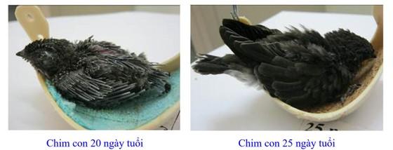 Phát triển bền vững nghề nuôi chim Yến tại Nam Trung bộ và Tây Nguyên ảnh 8