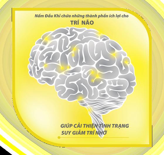 GIỚI THIỆU VỀ NẤM ĐẦU KHỈ HERICIUM & YẾU TỐ TĂNG TRƯỞNG THẦN KINH NGF ảnh 2