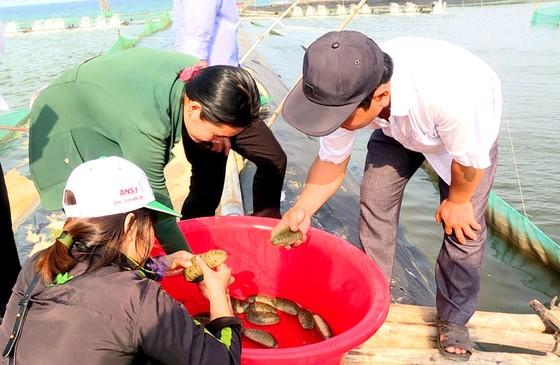Quảng Ngãi: Giải quyết ô nhiễm môi trường bằng nuôi hải sâm ghép ảnh 1