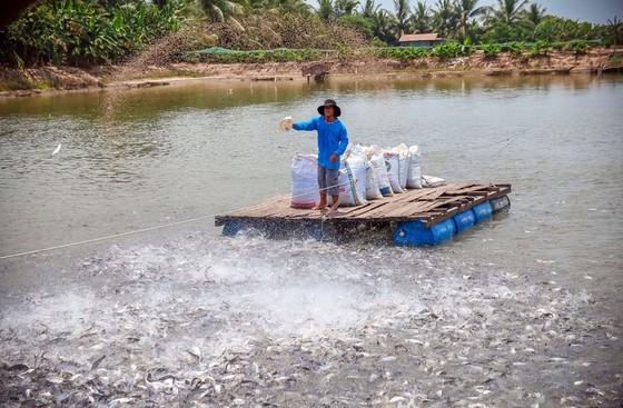 MM Mega Market Việt Nam đẩy mạnh xuất khẩu nông sản Việt sang Thái ảnh 1