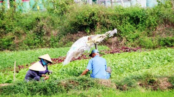 Tiếp sức sáng tạo cho ngành nông nghiệp - Bài 3: Những nút thắt cần tháo gỡ ảnh 1