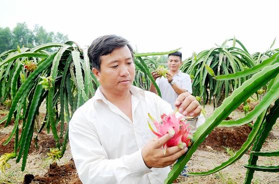 Đẩy mạnh xuất khẩu chính ngạch nông sản vào thị trường khó tính ảnh 1