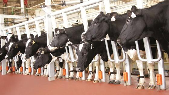 Tiếp sức sáng tạo cho ngành nông nghiệp - Bài 2: Xu hướng và triển vọng ảnh 1