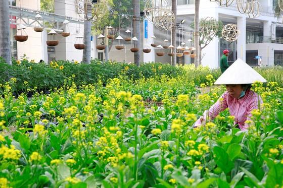 Hội chợ hoa xuân Phú Mỹ Hưng Tết Kỷ Hợi: Hoa và cuộc sống ảnh 3