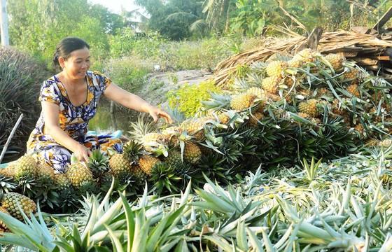 Giúp nông dân thích ứng với biến đổi khí hậu  ảnh 1