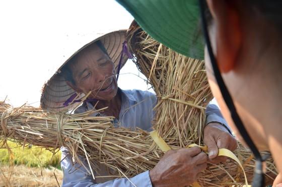 """Hàng trăm """"nông dân nhí"""" ướt đẫm mồ hôi… gặt lúa ảnh 8"""