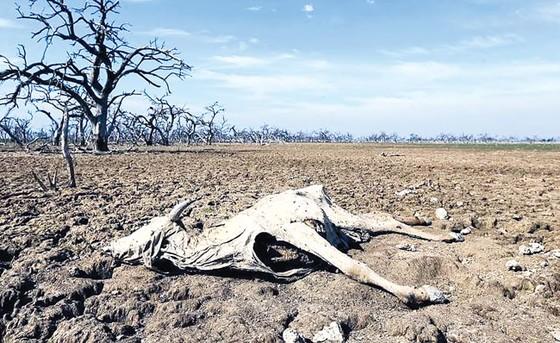 Thảm họa biến đổi khí hậu (K2): Xáo trộn xã hội ảnh 1