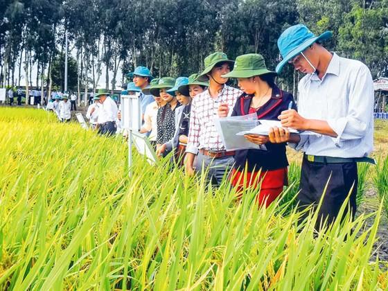TT Giống nông nghiệp Hậu Giang: Tạo niềm tin từ chất lượng sản phẩm ảnh 1