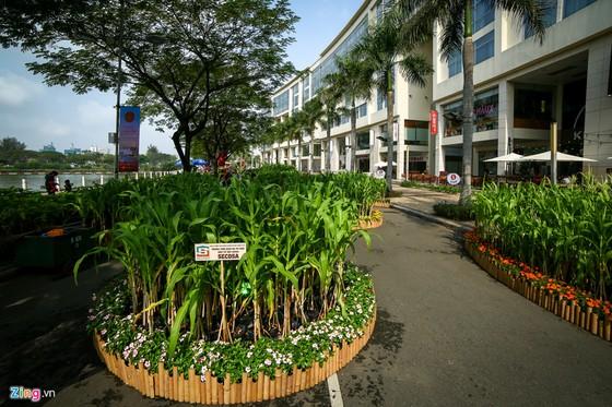 Hoi hoa xuan khu nha giau Phu My Hung hinh anh 3