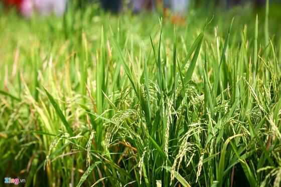 Hoi hoa xuan khu nha giau Phu My Hung hinh anh 4