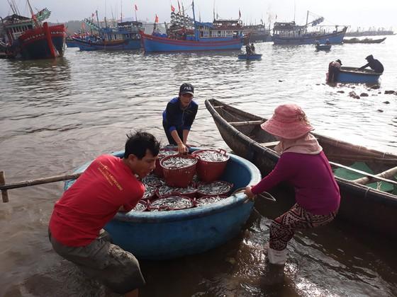 Mở biển, ngư dân trúng đậm cá cơm, mỗi đêm lời trăm triệu - Ảnh 2.