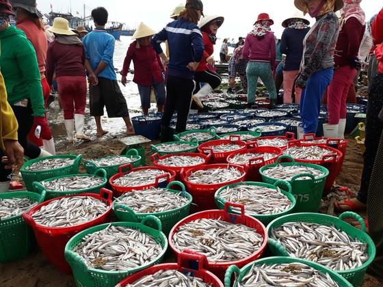 Mở biển, ngư dân trúng đậm cá cơm, mỗi đêm lời trăm triệu - Ảnh 5.