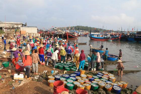 Mở biển, ngư dân trúng đậm cá cơm, mỗi đêm lời trăm triệu - Ảnh 6.