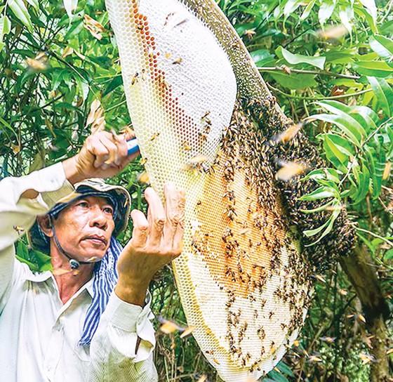 Mật ong, quà tặng của thiên nhiên ảnh 1