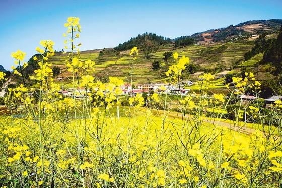 Mù Cang Chải - Vàng rực hoa cải mùa xuân ảnh 6