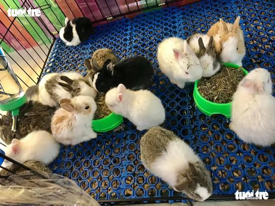 Tặng quà 8-3 bằng bọ ú, chuột hamster, thỏ, sóc... mới chất - Ảnh 2.