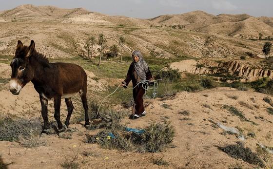 Những gia đình cuối cùng sống dưới lòng đất ở Tunisia - Ảnh 16.