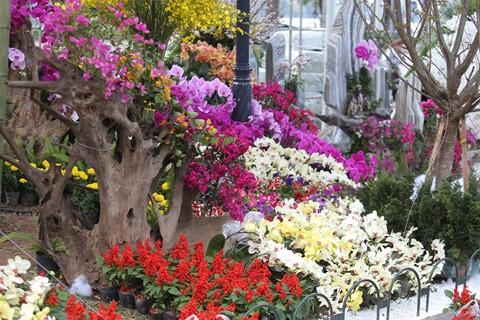 Hàng nghìn cành hoa đã sẵn sàng khoe sắc tại Lễ hội hoa anh đào 2018 - ảnh 9
