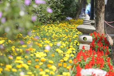 Hàng nghìn cành hoa đã sẵn sàng khoe sắc tại Lễ hội hoa anh đào 2018 - ảnh 10