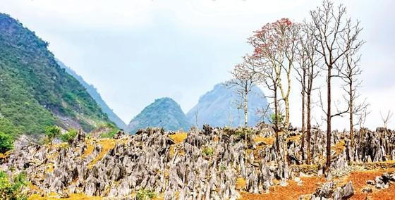 Cao nguyên đá tai mèo ở Điện Biên ảnh 5