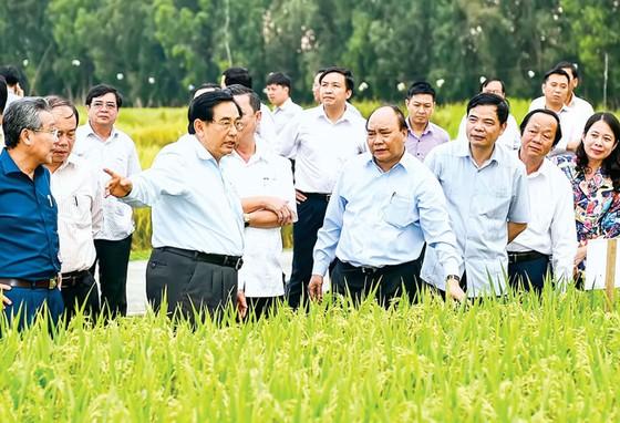 Ngành nông nghiệp hữu cơ: Vẫn loay hoay trong thế khó ảnh 2