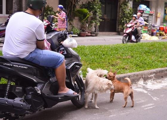 Khủng hoảng với băng nhóm chó mèo ở chung cư - Ảnh 2.