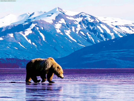 Alaska kho báu nước Mỹ ảnh 5