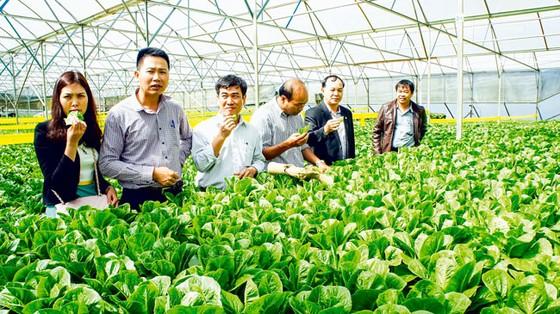 Nông nghiệp công nghệ cao: Doanh nghiệp nhỏ còn lẻ loi ảnh 1