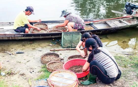 Nhẹ nhàng  Chợ nổi  trên phá Tam Giang ảnh 5
