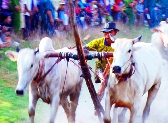 Hàng chục ngàn người xem đua bò Bảy Núi ảnh 3