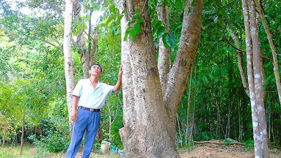 Ông Bảy Ách bên trong khu rừng bán ngập