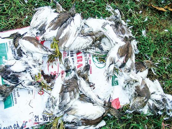 Tận diệt chim cò ảnh 9